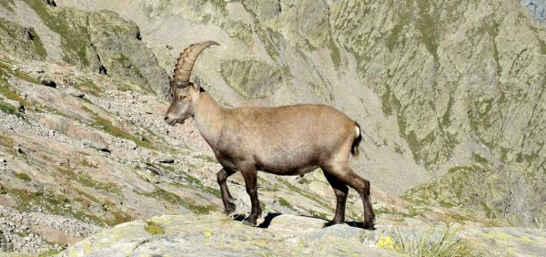 Day hike in the Alps of Piedmont and Aosta Valley to the discovery of the Gran Paradiso wildlife