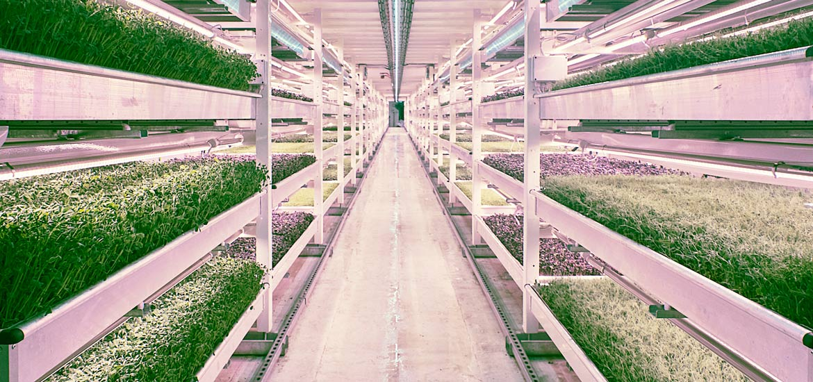 Vertical Farm Torino - Sustainable agriculture