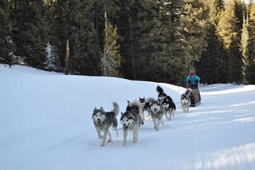 Piedmont: dog sledding experiences and tours