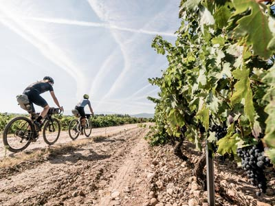 E-bike or MTB day tour of Langhe, Piedmont