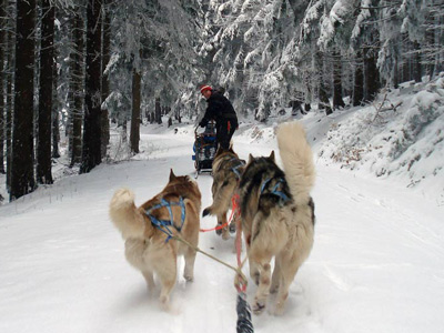 Dog sledding experiences in the Alps of Piedmont and Aosta Valley