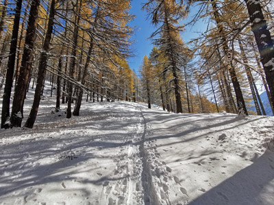 Snowshoeing experiences in the Alps of Piedmont and Aosta Valley