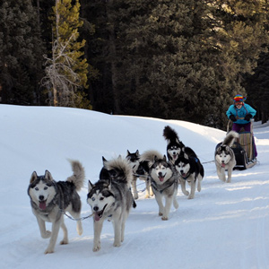 Dog sledding experiences in Italy