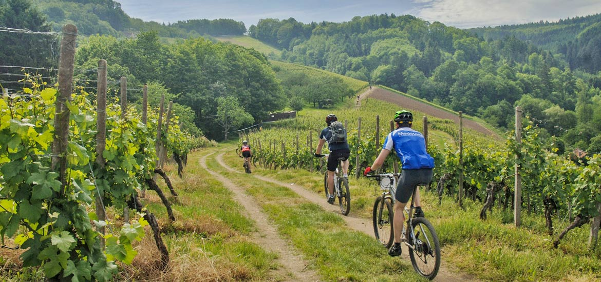 Piedmont: cycling and wine tasting experience in the Langhe region