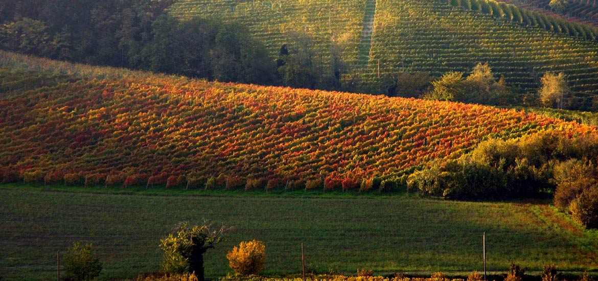 Cycling and e-bike weekend in Turin and Langhe, homeland of Barolo and Barbaresco