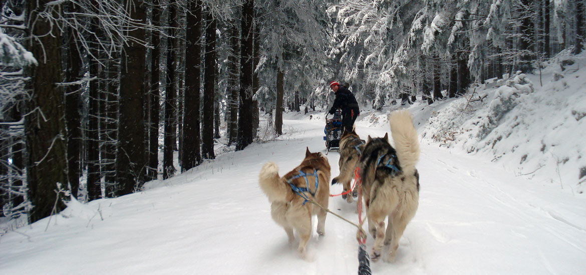 Musher experience: dog sledding in the Piedmont Alps