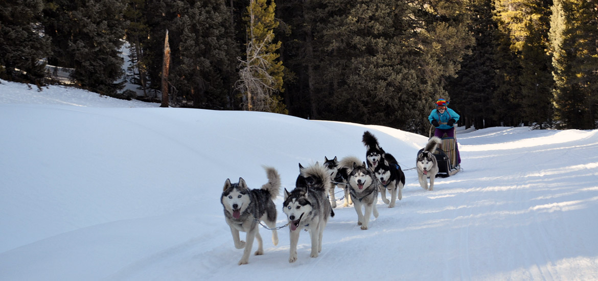 Dog sledding experience in Piedmont Alps