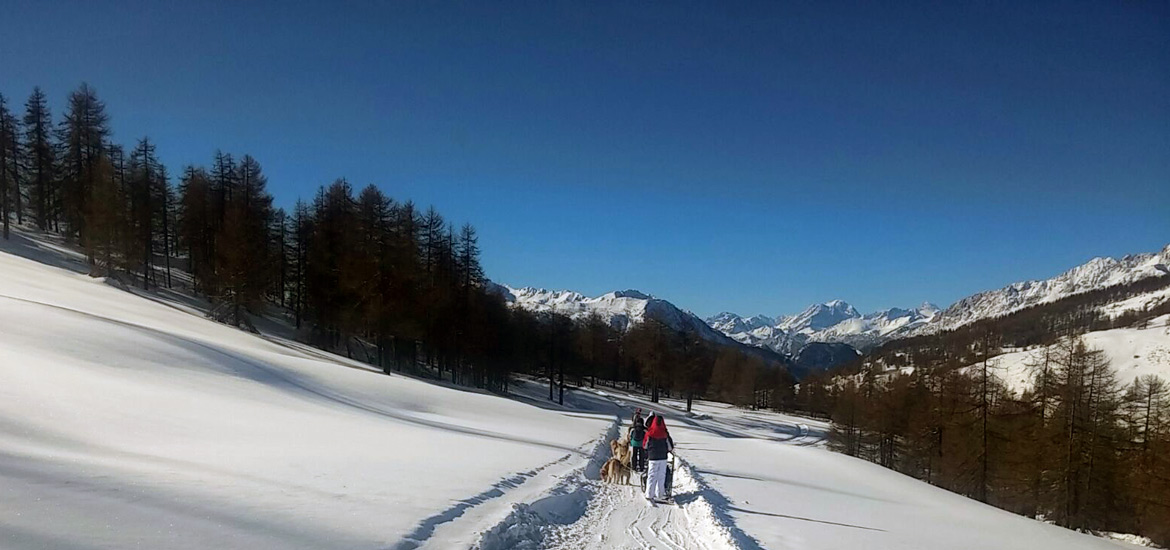 Dog sledding in the Alps of Piedmont with guide