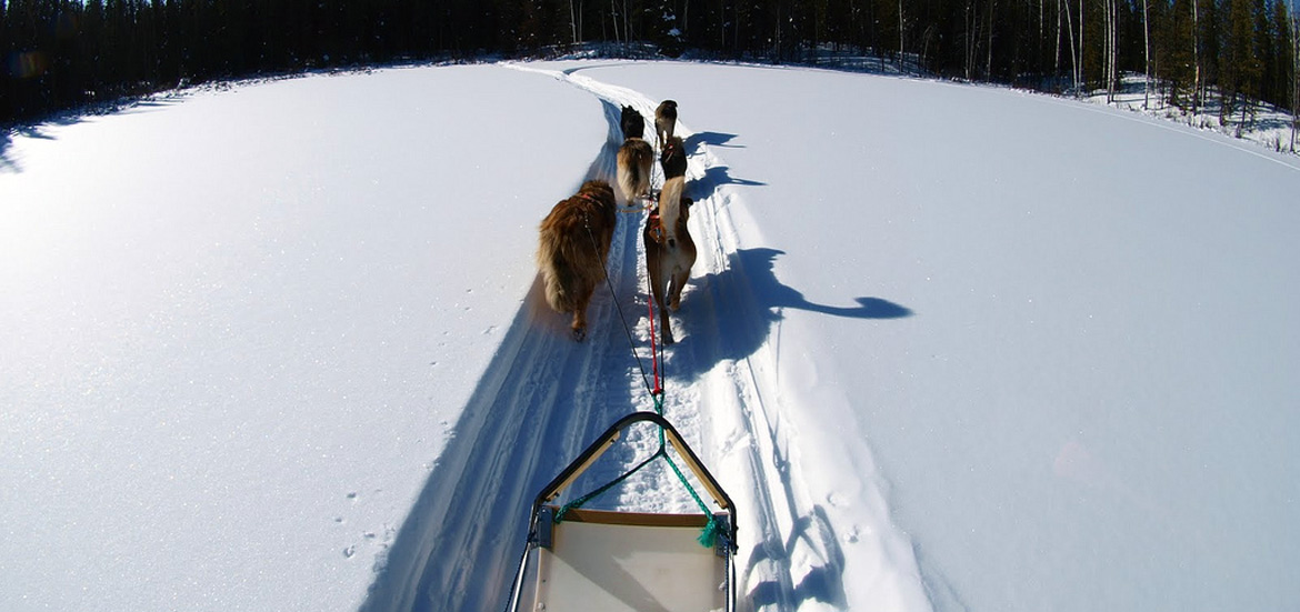 Musher experience dog sledding in Piedmont