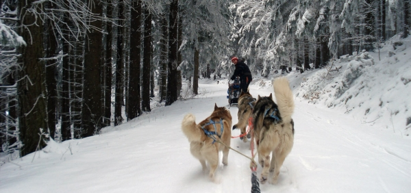 Dog sledding musher experience in the Alps of Piedmont