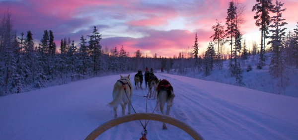 Dog sledding excursion in the Alps of Piedmont and dinner in mountain hut
